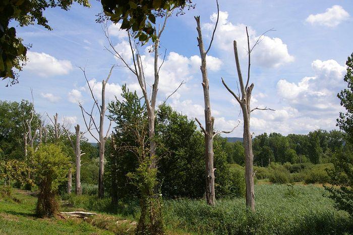 Federbachbruch bei Muggensturm