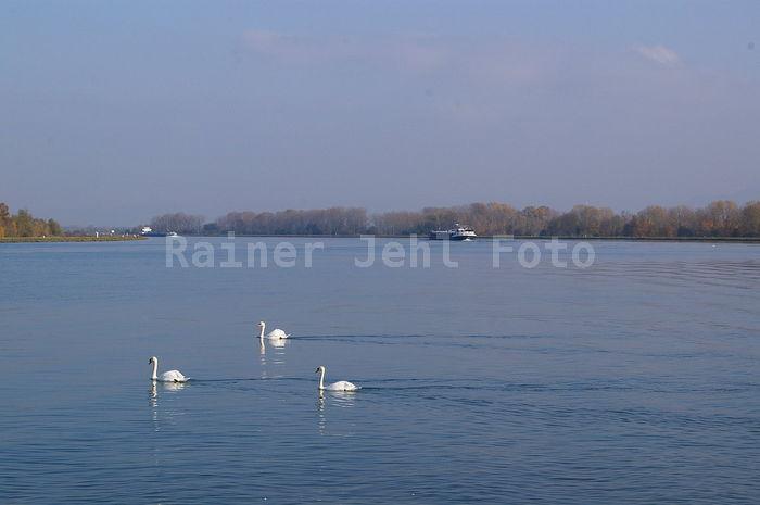 Rhein bei Söllingen