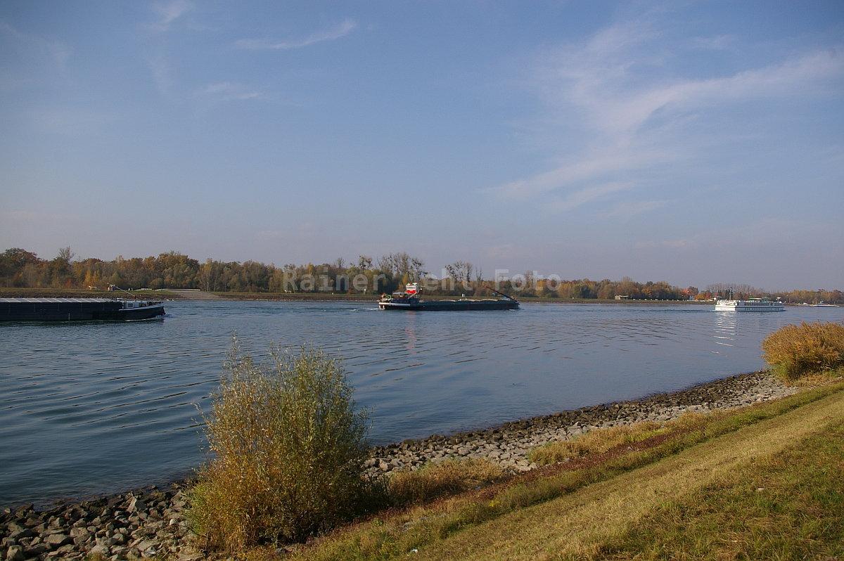 Rhein bei Greffern