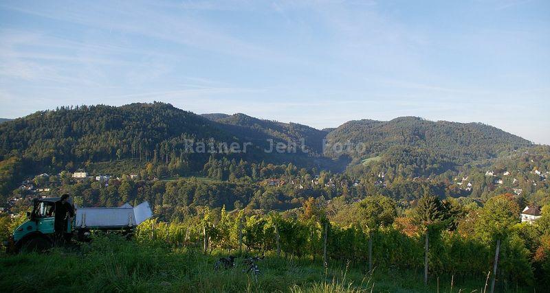 Leisberg - 'Lach' - Waldeneck