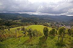Lichtental - Geroldsau - Badner Höhe