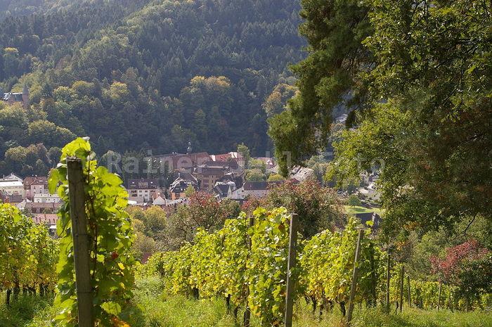 Kloster Lichtental vom Schafberg