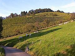 Schafberg - Großvieh